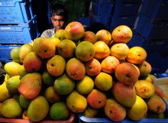Mango-Stand in Bagalore